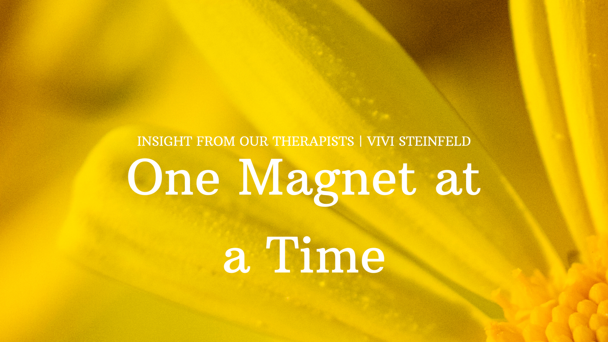 Read more about the article One Magnet At A Time