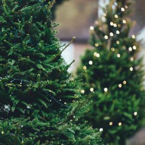 christmas tree, feel at home